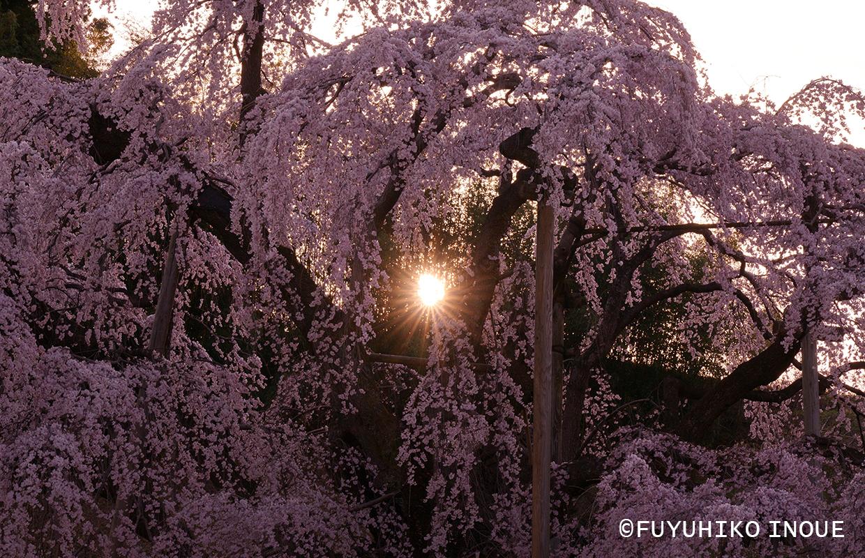国内の四季 春
