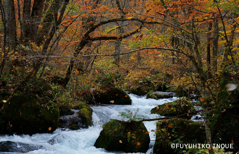 国内の四季 秋