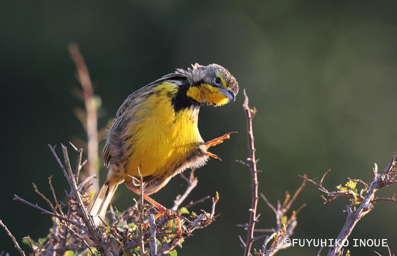 その他の鳥